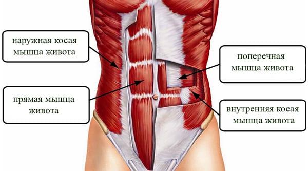 Где находятся мышцы кора?
