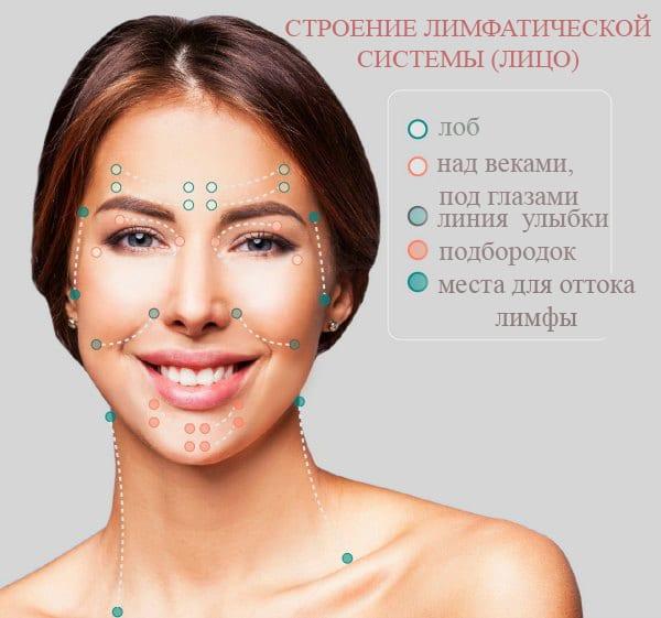 Строение лимфатической системы (лицо)