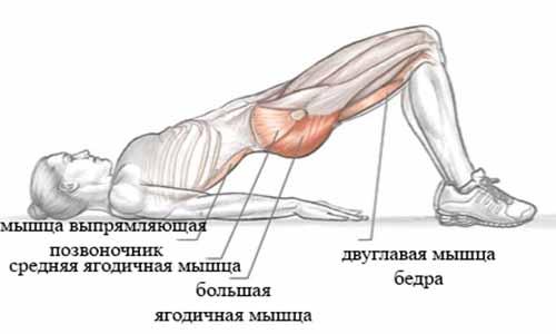 """Основные мышцы задействованные при выполнении """"Ягодичного мостика"""""""