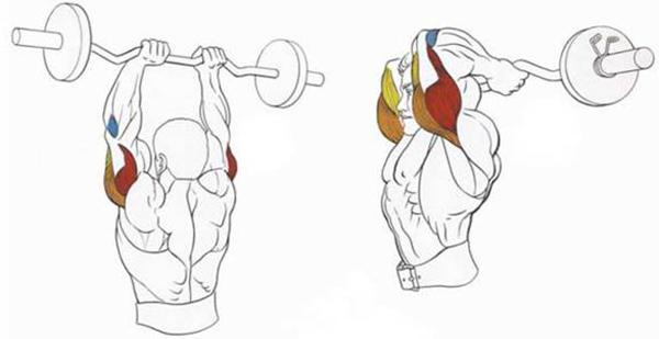 французский жим – это целенаправленная проработка трехглавой мышцы плеча