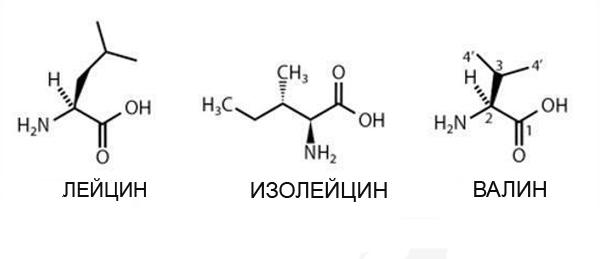 Лейцин, изолейцин и валин